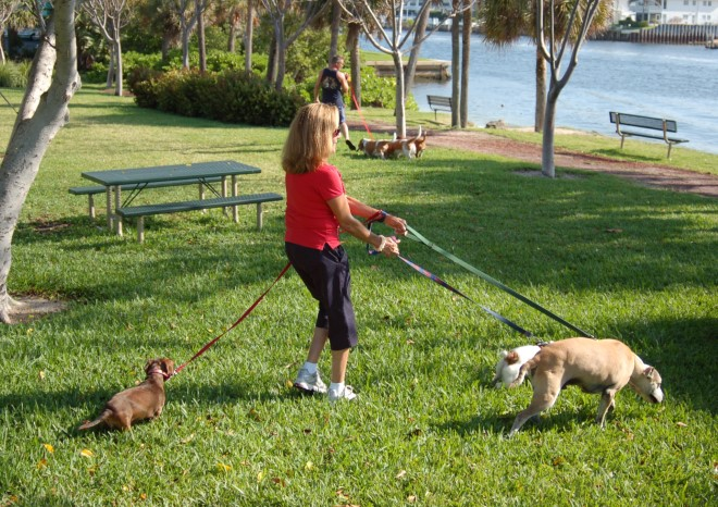 Multiple Dogs Without Sling