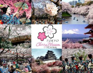 IBooknow room deals in tokyo cherry blossom festival