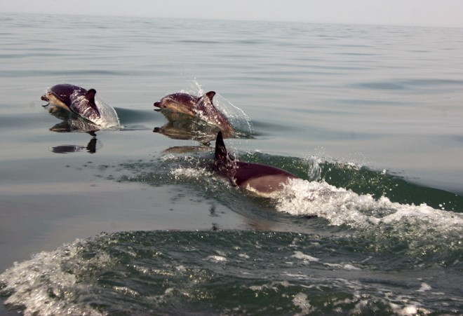 Dolphin Pod Cornwall boat trips