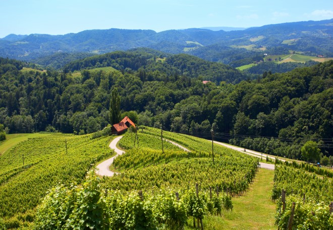 Špičnik Heart on wine road by Slovenian Tourist Board